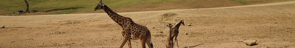 6-giraf.jpg