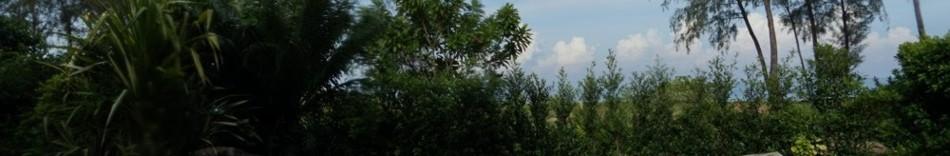 9-forest.jpg
